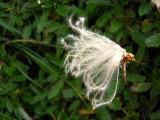 Flowers00046.jpg