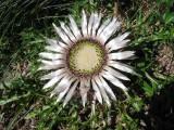 Flowers00048.jpg