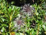 Flowers00049.jpg