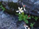 Flowers00050.jpg
