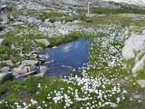 Flowers00051.jpg