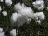 Flowers00052.jpg