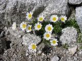 Flowers00053.jpg