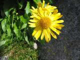 Flowers00054.jpg