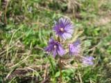 Flowers00060.jpg