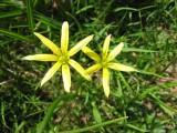 Flowers00064.jpg