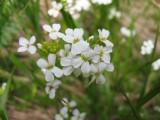 Flowers00066.jpg