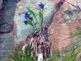 Flowers00068.jpg