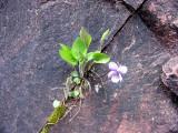 Flowers00069.jpg