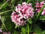 Flowers00078.jpg