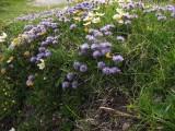 Flowers00079.jpg
