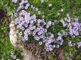 Flowers00081.jpg