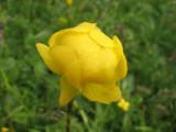 Flowers00085.jpg