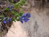 Flowers00086.jpg