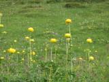 Flowers00088.jpg