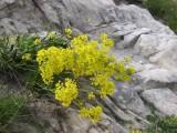 Flowers00089.jpg
