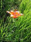 Flowers00090.jpg