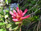 Flowers00091.jpg