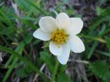 Flowers00095.jpg