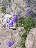 Flowers00096.jpg