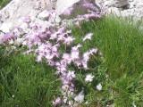 Flowers00097.jpg
