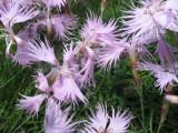 Flowers00098.jpg