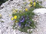 Flowers00099.jpg