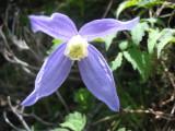 Flowers00100.jpg
