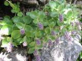 Flowers00102.jpg