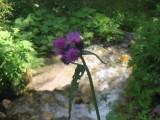 Flowers00107.jpg