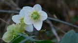 Flowers00109.jpg