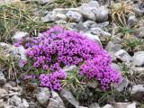 Flowers00111.jpg