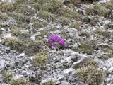 Flowers00112.jpg