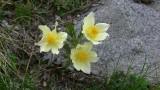 Flowers00115.jpg