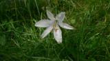 Flowers00116.jpg