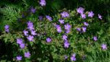 Flowers00119.jpg