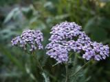 Flowers00120.jpg