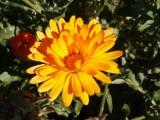 Flowers00121.jpg