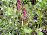 Flowers00123.jpg