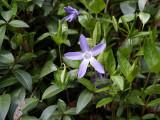 Flowers00124.jpg