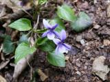 Flowers00125.jpg