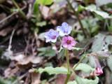 Flowers00126.jpg