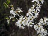 Flowers00127.jpg
