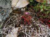 Flowers00130.jpg