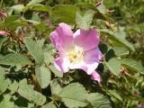 Flowers00132.jpg