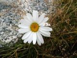 Flowers00133.jpg