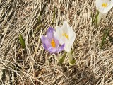 Flowers00134.jpg
