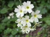 Flowers00135.jpg