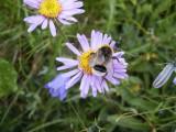 Flowers00137.jpg