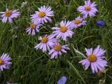 Flowers00139.jpg